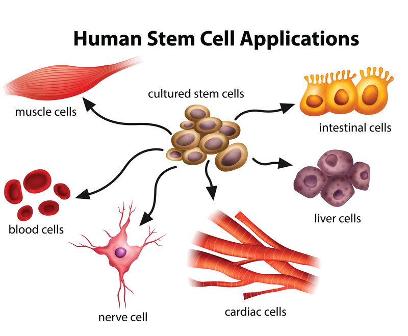 Stem Cell Treatment: Understanding the Importance and Applicability